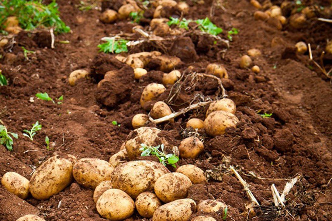 PAN-AFRICAN MODEL FARM